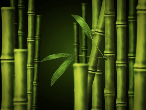 Bamboo in Adobe Photoshop